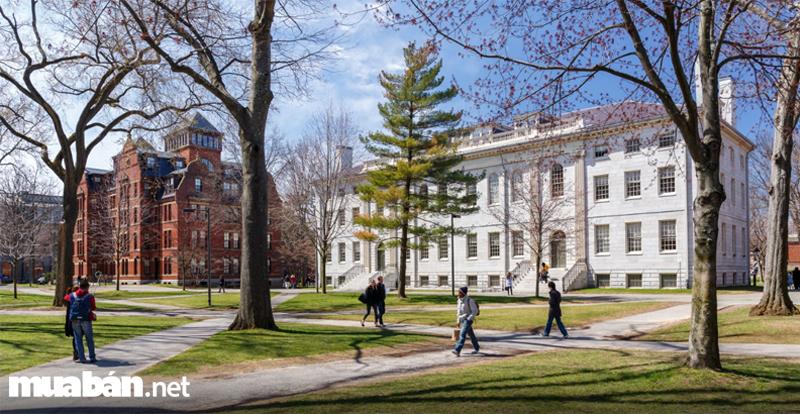 Toàn cảnh trường Harvard vào mùa xuân