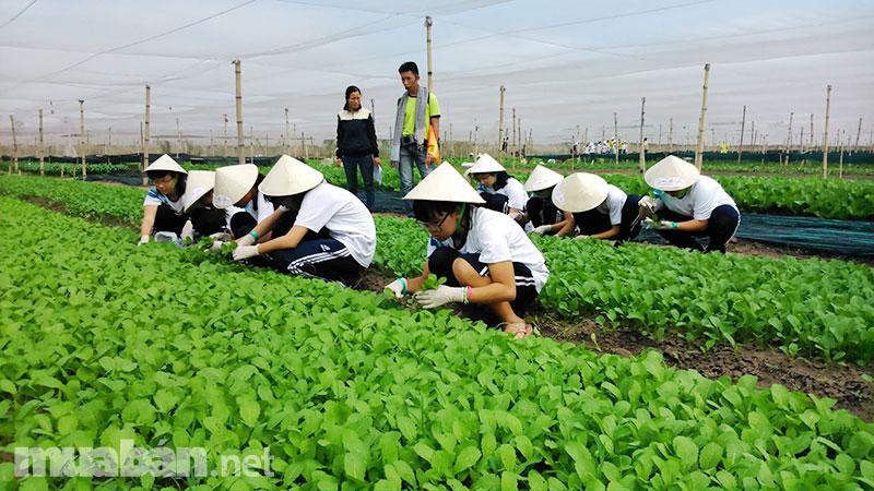 """Sinh viên nông nghiệp được doanh nghiệp """"đặt chỗ"""" trước khi ra trường"""