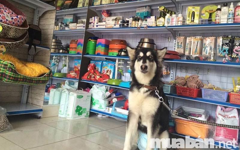 Những địa chỉ bán thú cưng uy tín tại tp hcm