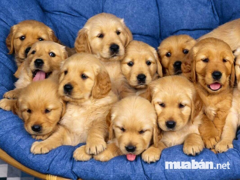 Nên mua thú cưng tại các cửa hàng uy tín