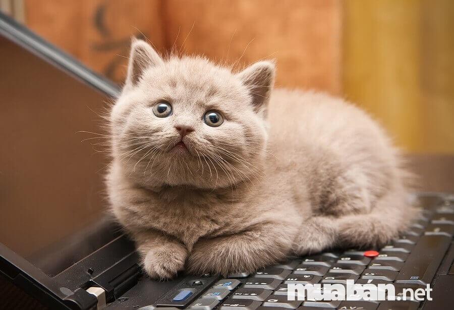 Nên tập thói quen tắm cho mèo khi còn nhỏ