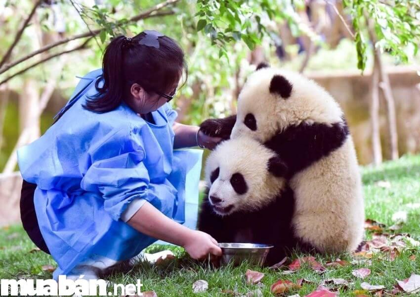 Mấy em gấu dễ thương thế này thì làm việc cả ngày cũng được nhỉ