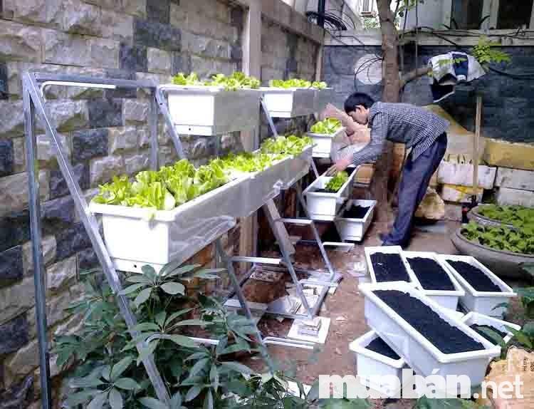 Thiết kế vườn trồng rau sạch tiết kiệm diện tích