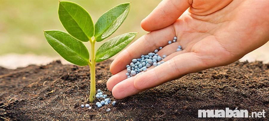 Bón đúng loại phân cho nhu cầu phát triển trong từng giai đoạn nếu muốn sản xuất rau sạch