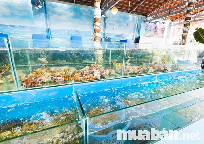 Hệ thống nuôi hải sản cần thiết cho các vựa nhỏ lẻ khi kinh doanh hải sản tươi sống