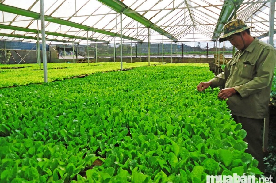 Mua bán đất trang trại để trồng trọt rất phổ biến
