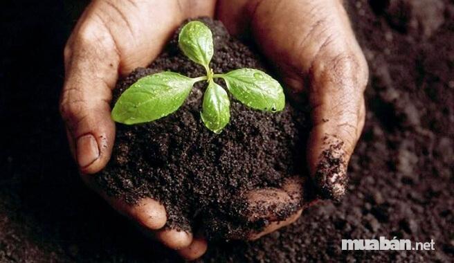 Ở mỗi giai đoạn sinh trưởng, cây sẽ cần một chế độ dinh dưỡng khác nhau