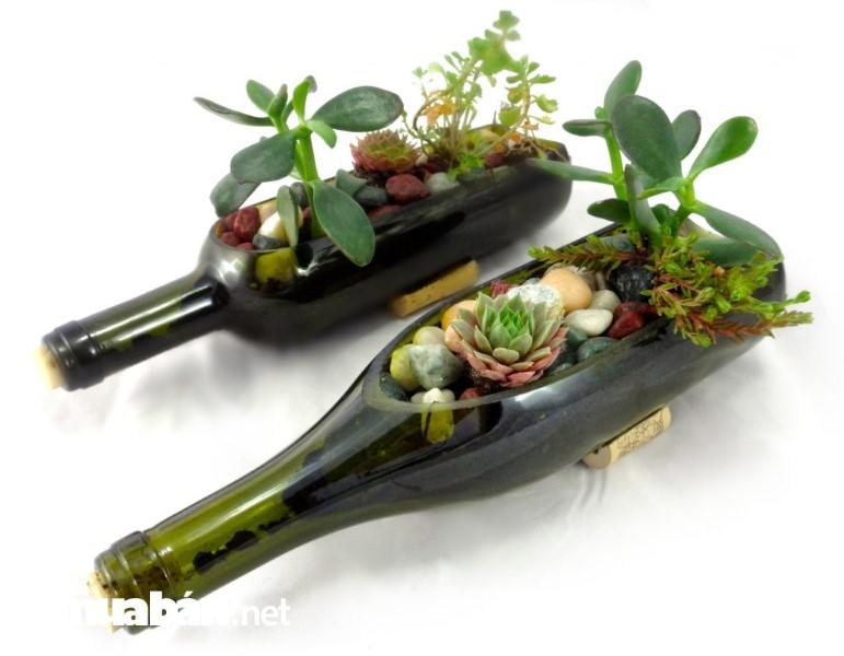 Từ chai thủy tinh bạn có thể tạo nên những chậu cây độc đáo