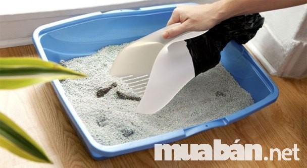 Cát vệ sinh đất sét vón cục cho mèo vô cùng tiện lợi