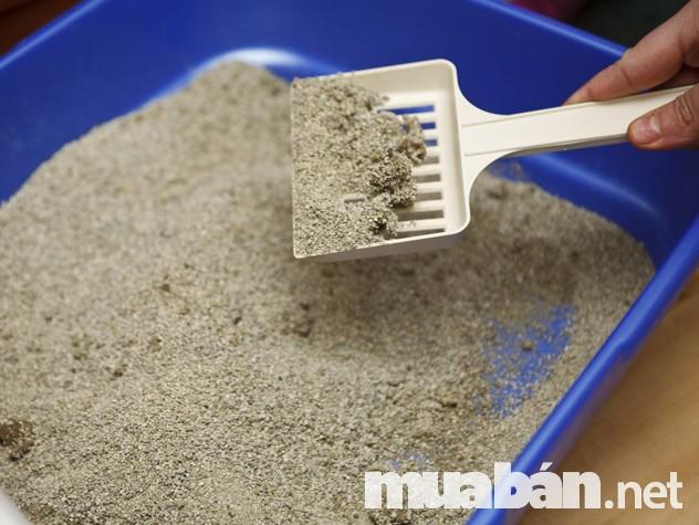 Cát vệ sinh đất sét không vón cục với giá thành cực rẻ