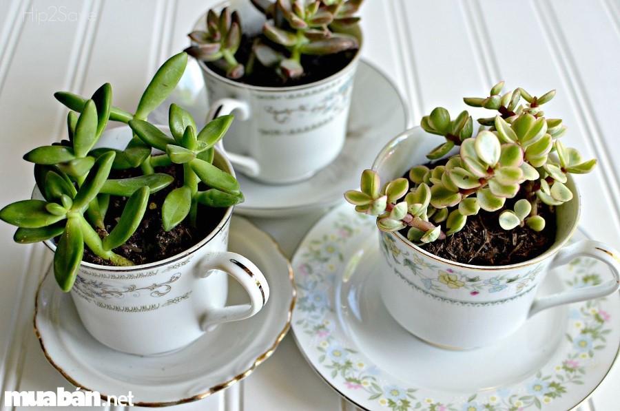 Tách trà cũ tạo nên chậu cây mới