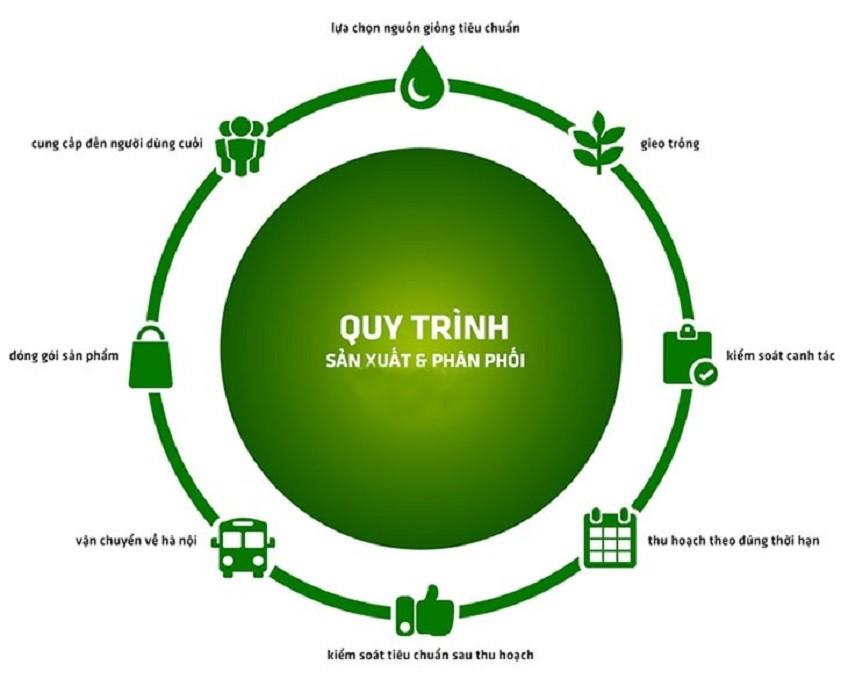 Sản xuất rau sạch với quy trình VietGap