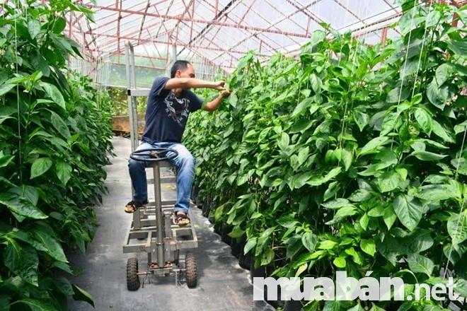 Hình thức thủ công trong quá trình sản xuất rau sạch