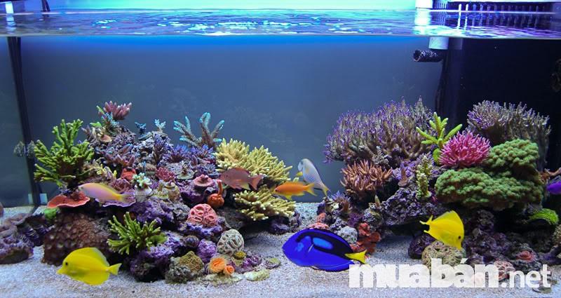 Bể cá cảnh mang ý nghĩa phong thủy rất lớn