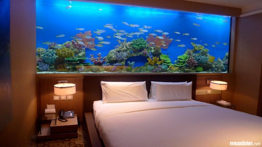 """Không nên đặt bể cá trong phòng ngủ gây """"âm thịnh dương suy"""""""