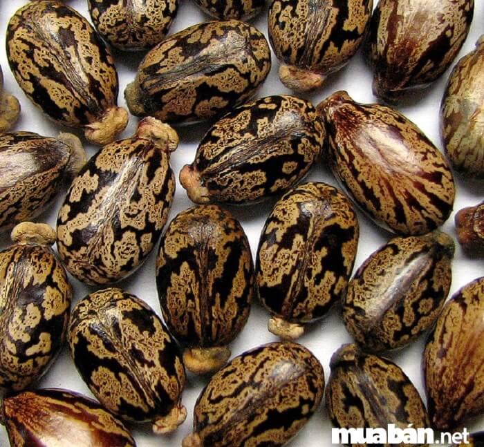 Đặc điểm của hạt giống tốt