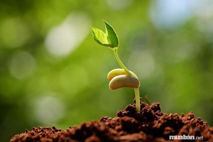 Không chọn hạt giống có chất bảo quản