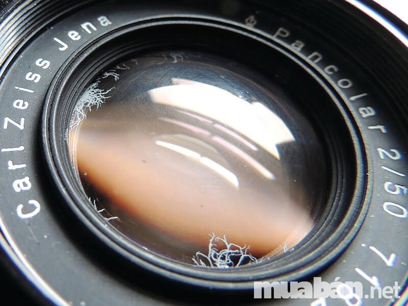 Nấm mốc khiến ống kính máy ảnh bị ảnh hưởng nghiêm trọng