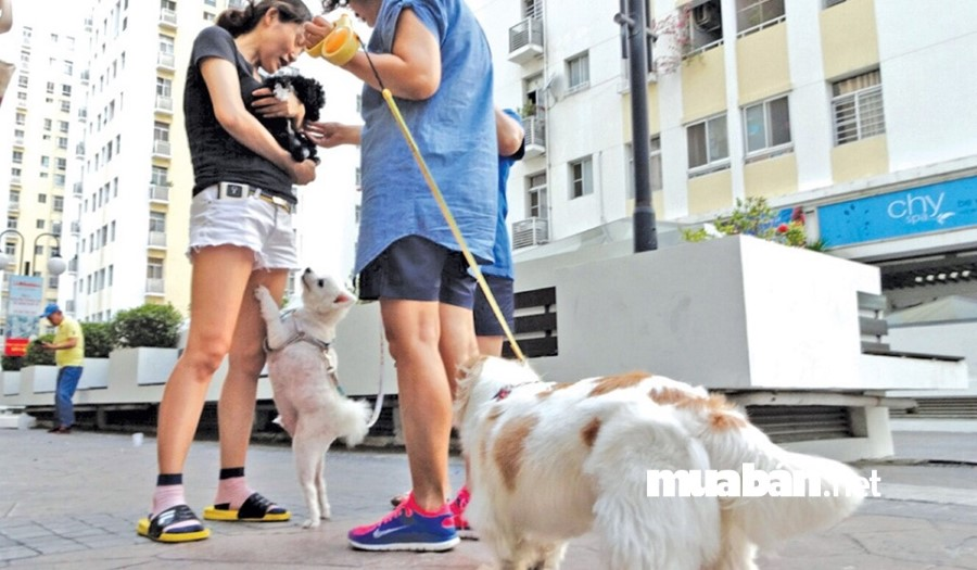 Cân nhắc về kinh phí mua và nuôi chó cảnh.
