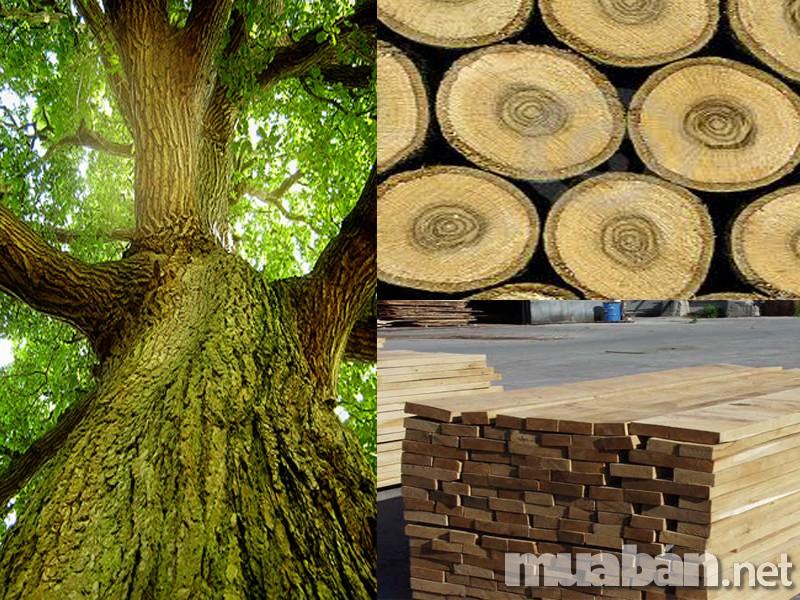 Những đồ gỗ nội thất làm từ chất liệu này thường có độ cứng cáp cao, ít bị oxy hóa, bị mối, mọt và có độ bền rất lâu. Tính thẩm mỹ cao bởi những vân gỗ tự nhiên rất độc đáo, đa dạng và hợp với quan niệm thẩm mỹ của người Việt từ xưa đến nay. Gỗ tự nhiên rất an toàn đối với sức khỏe, ít thải ra khí CO2 như những loại vật liệu xây dựng khác.