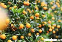 """Top 7 loại cây kiểng Tết """"Rước"""" Lộc vào nhà dịp Tết Nguyên đán 2019"""