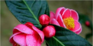Top 7 loại hoa chưng Tết luôn mang đến may mắn, tài lộc