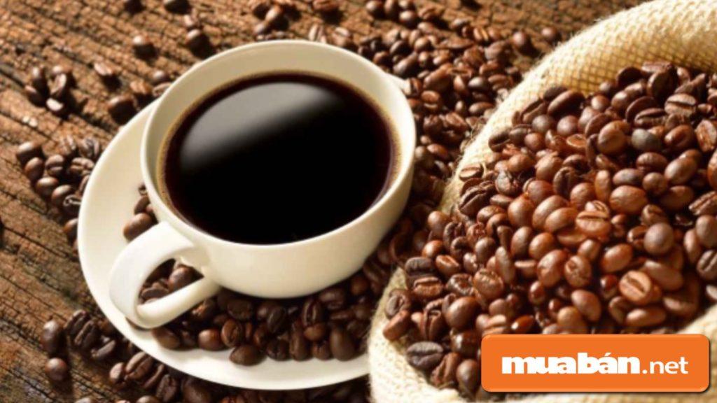 Bạn phải hiểu được tất cả những thông tin về café như các loại café, đặc tính của cây, các cách pha café...