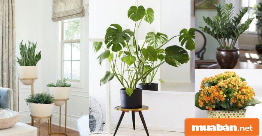 Có thêm cây cối như có thêm máy lọc khí thiên nhiên, bởi chúng có tác dụng lọc sạch không khí.