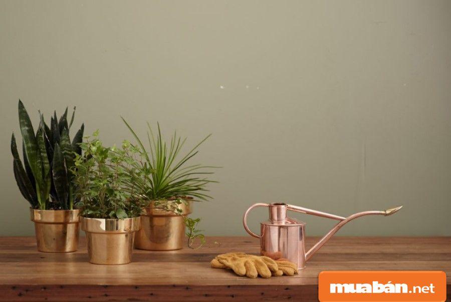 Ngoài tác dụng trang trí, việc đặt cây xanh trong nhà còn có ý nghĩa về phong thủy.