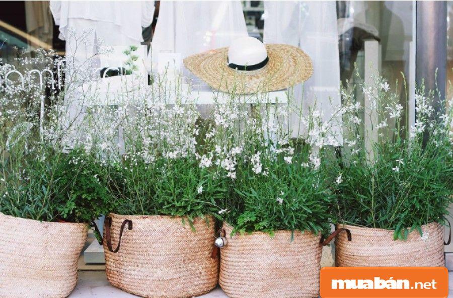Chăm sóc cây cối giúp chúng ta thư giãn, thoải mái đầu óc hơn.