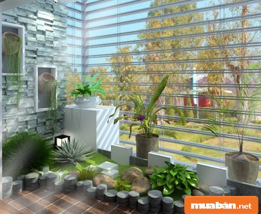Trồng cây xanh trong nhà có tác dụng trang trí và lọc không khí khá tốt.