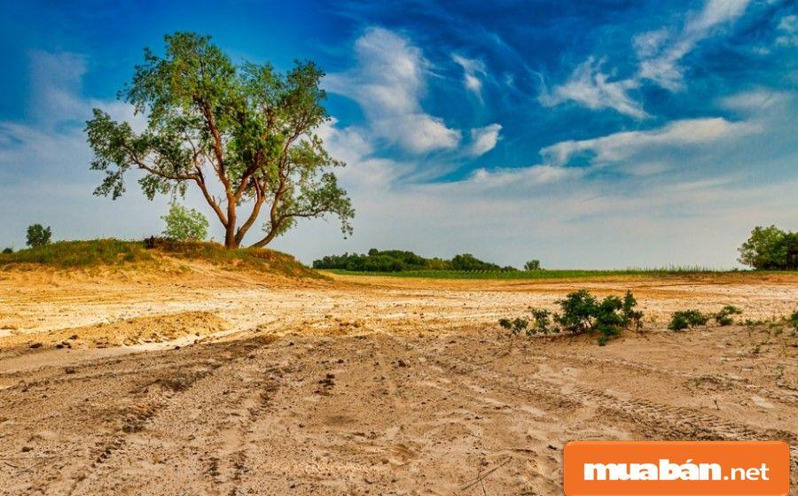 Hình ảnh chụp lô đất là yếu tố nhằm tăng thêm tính thu hút cho tin đăng.