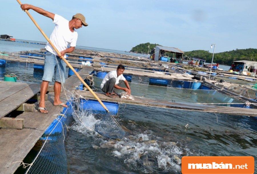 Kinh tế tăng trưởng về số lượng, đa dạng hơn các loại hình sản xuất, kinh tế biển chiếm 73,82% GDP của toàn tỉnh.