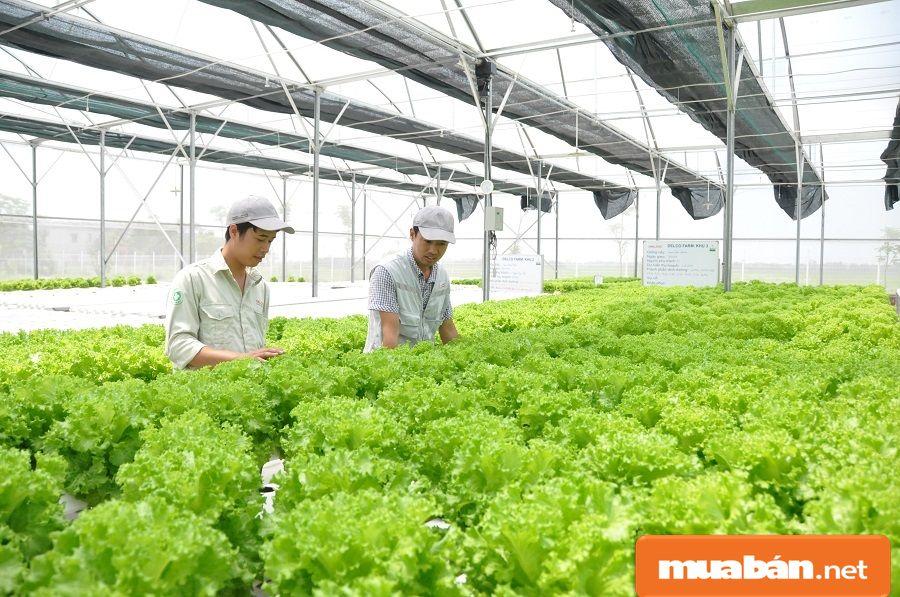Nông nghiệp Hà Đông có nhiều yếu tố tiến bộ, xây dựng được 2 nhà máy sơ chế rau, quả.