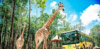 Vinpearl Safari Phú Quốc và những điều có thể bạn chưa biết!