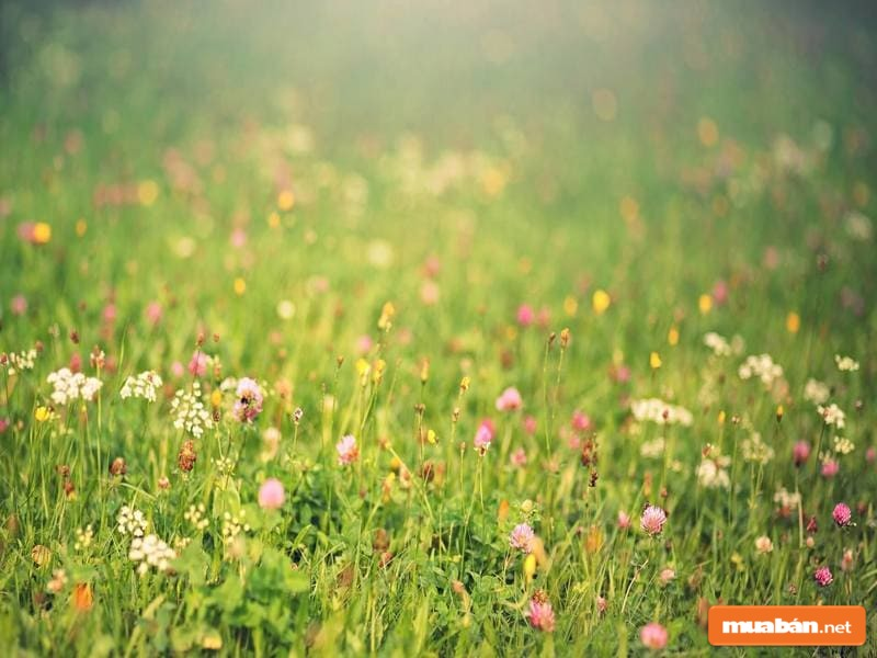 Bức tranh của mùa xuân đã được thể hiện hoàn mỹ trong ca khúc này