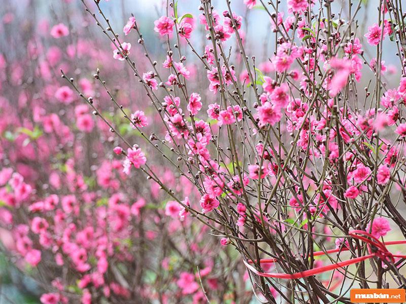 cây cảnh đẹp 07