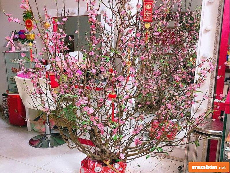 hoa đào ngày Tết 03
