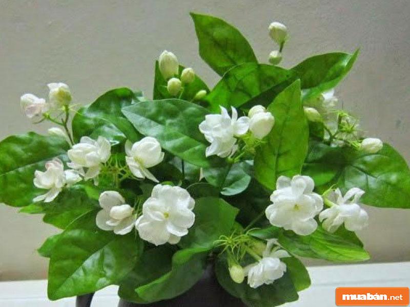 hoa đặt bàn thờ 011