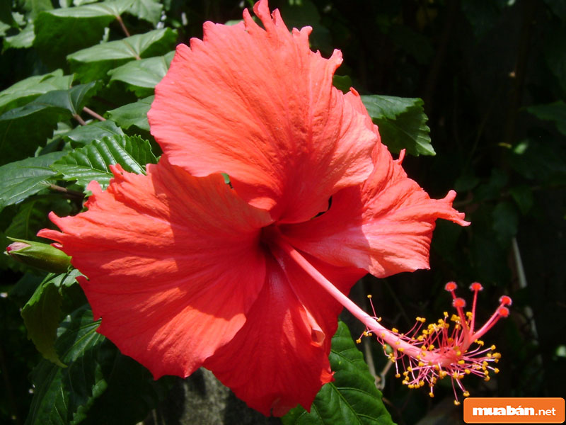 hoa đặt bàn thờ 013