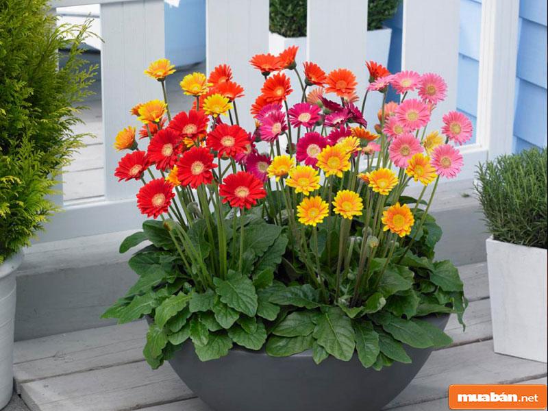 hoa đặt bàn thờ 06