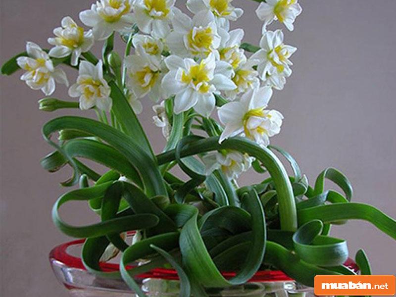 hoa đặt bàn thờ 22