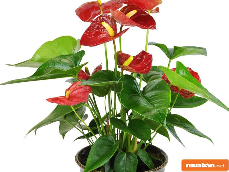 hoa đặt bàn thờ 23