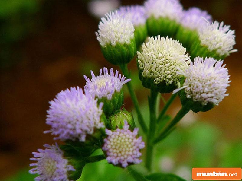 hoa đặt bàn thờ 25
