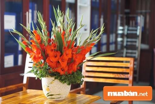 Để Có Bình Hoa Lay Ơn Đẹp Bạn Nên Mua Hoa Lay Vào Buổi Sáng Sớm Và Chiều Tối.