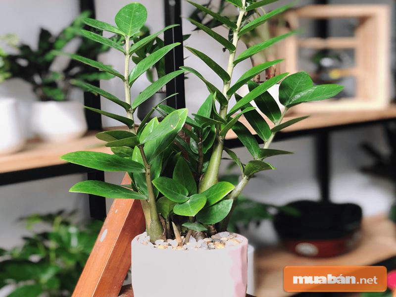 Chỉ một cây xanh cũng khiến căn nhà của bạn trở nên đáng yêu hơn