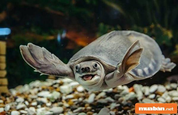 Nuôi Rùa Phong Thủy Và 2 Cách Nuôi Rùa Cần Biết!