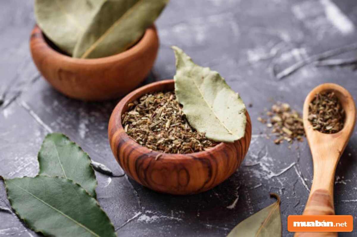 Nguyệt quế thực sự là một loại cây nên trồng, mang lại nhiều lợi ích cho cuộc sống