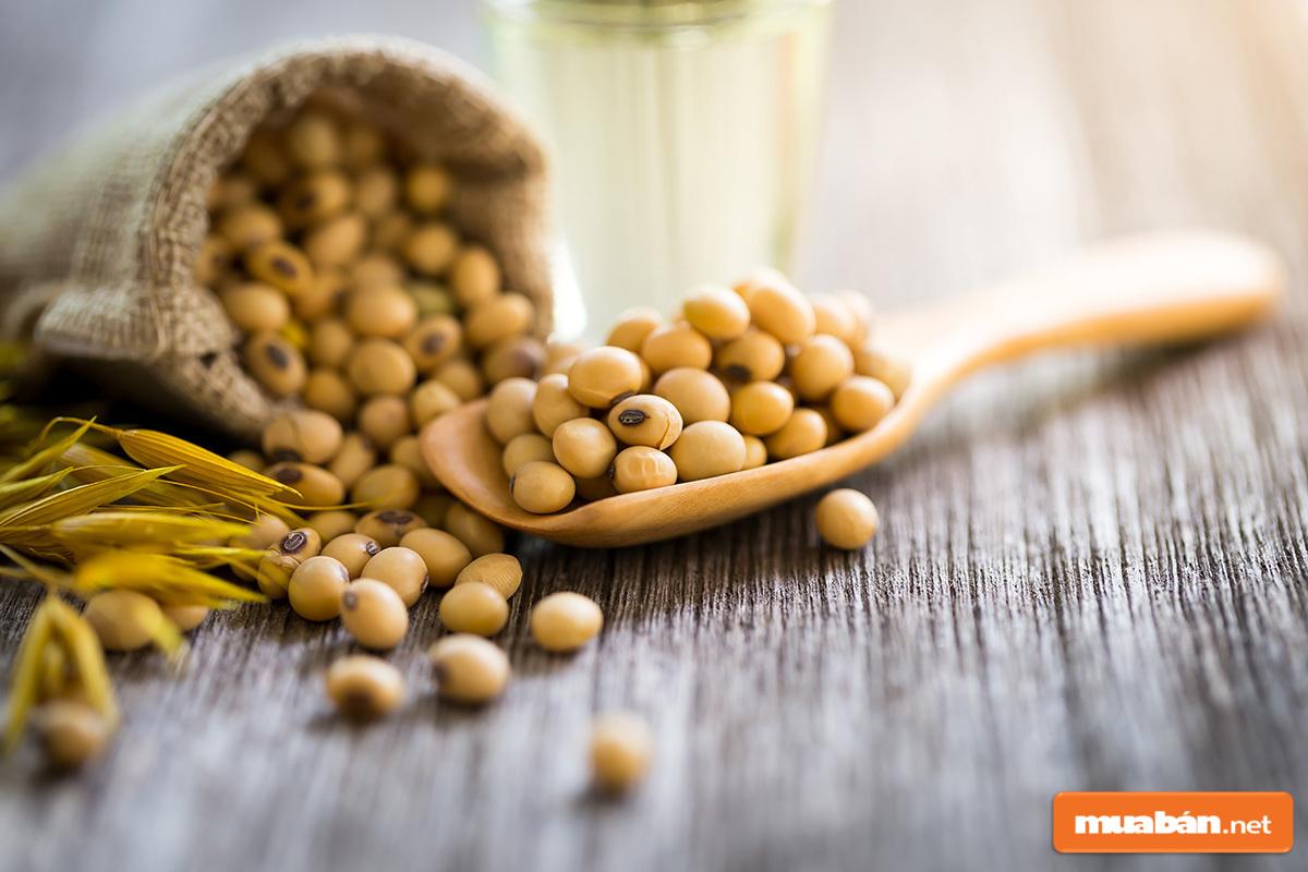 Sử dụng đậu nành nghiền mịn sẽ giúp chăm cây nguyệt quế rất tốt