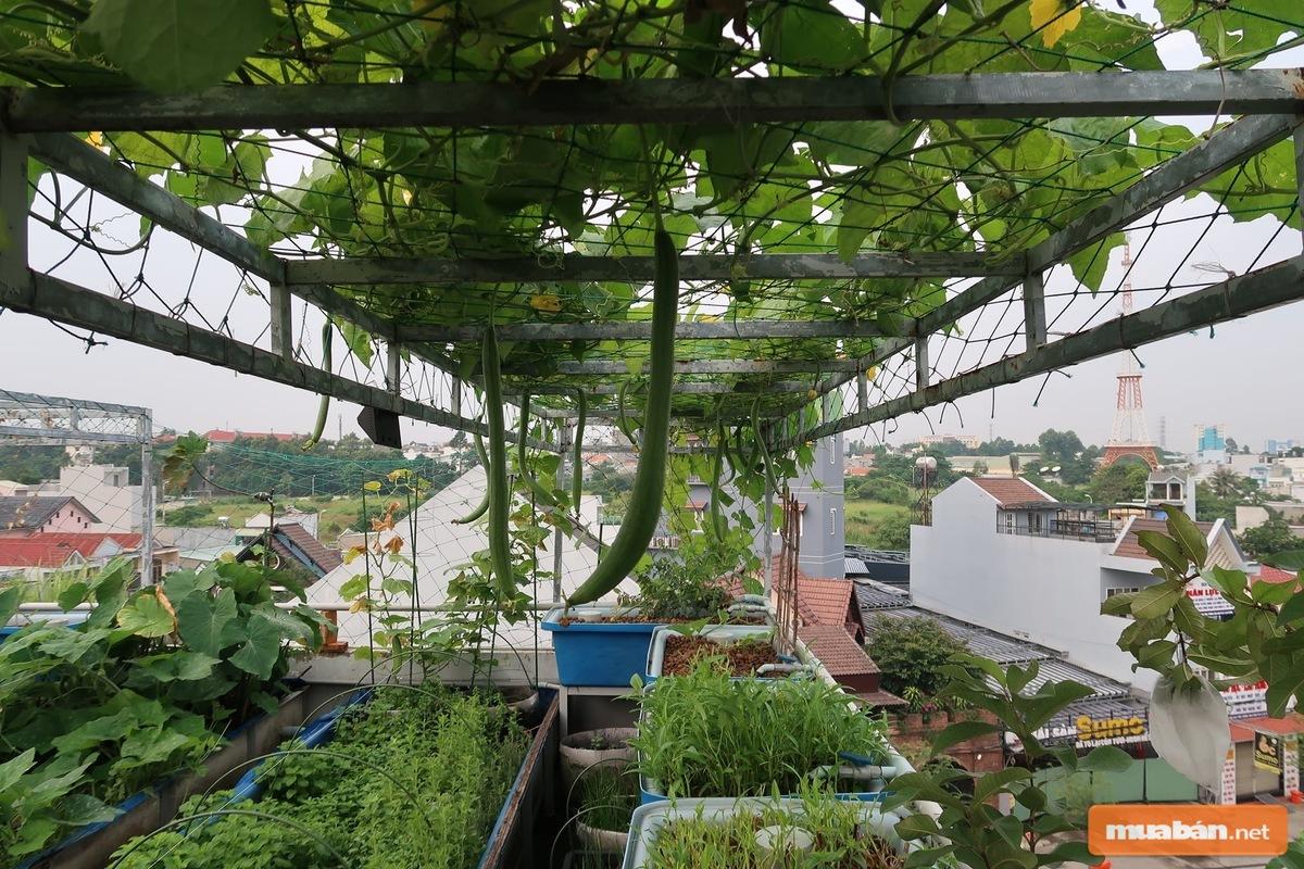 Sử dụng những chiếc thùng xốp giúp bạn trồng rau rất hiệu quả